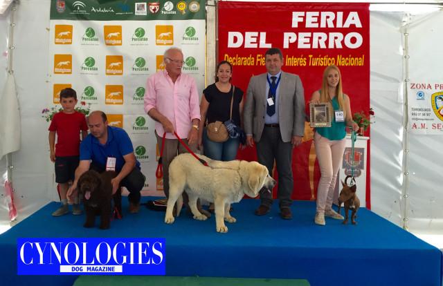 Bis Clase Cachorros Archidona 2015
