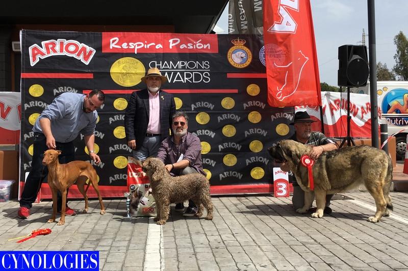 Concurso 17  RinconV 2018